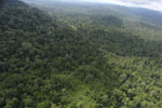 Aerial view of heavily logged rainforest -- sabah_aerial_2725