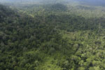 Aerial view of heavily logged rainforest -- sabah_aerial_2726