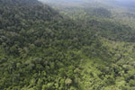 Aerial view of heavily logged rainforest -- sabah_aerial_2727