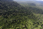 Aerial view of heavily logged rainforest -- sabah_aerial_2729