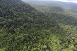 Aerial view of heavily logged rainforest -- sabah_aerial_2731