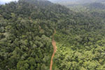 Aerial view of heavily logged rainforest -- sabah_aerial_2732
