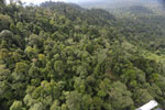 Selectively logged forest under FSC criteria -- sabah_aerial_2736
