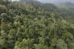 Selectively logged forest under FSC criteria -- sabah_aerial_2737