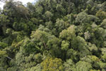 Selectively logged forest under FSC criteria -- sabah_aerial_2741