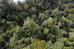 Selectively logged forest under FSC criteria -- sabah_aerial_2742
