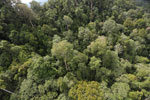 Selectively logged forest under FSC criteria -- sabah_aerial_2743