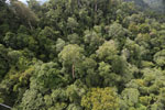 Selectively logged forest under FSC criteria -- sabah_aerial_2744