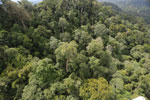 Selectively logged forest under FSC criteria -- sabah_aerial_2745
