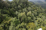 Selectively logged forest under FSC criteria -- sabah_aerial_2746