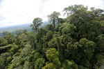 Selectively logged forest under FSC criteria -- sabah_aerial_2749