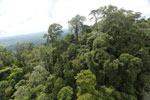 Selectively logged forest under FSC criteria -- sabah_aerial_2750