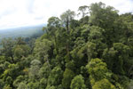Selectively logged forest under FSC criteria -- sabah_aerial_2752