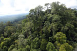 Selectively logged forest under FSC criteria -- sabah_aerial_2753