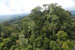 Selectively logged forest under FSC criteria -- sabah_aerial_2754