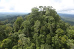 Selectively logged forest under FSC criteria -- sabah_aerial_2756