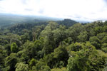 Selectively logged forest under FSC criteria -- sabah_aerial_2760