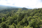 Selectively logged forest under FSC criteria -- sabah_aerial_2761