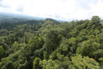 Selectively logged forest under FSC criteria -- sabah_aerial_2763