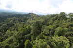Selectively logged forest under FSC criteria -- sabah_aerial_2764