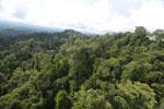 Selectively logged forest under FSC criteria -- sabah_aerial_2764