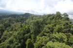 Selectively logged forest under FSC criteria -- sabah_aerial_2766