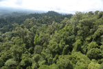 Selectively logged forest under FSC criteria -- sabah_aerial_2767