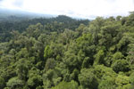 Selectively logged forest under FSC criteria -- sabah_aerial_2768