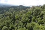 Selectively logged forest under FSC criteria -- sabah_aerial_2768
