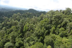 Selectively logged forest under FSC criteria -- sabah_aerial_2769