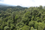 Selectively logged forest under FSC criteria -- sabah_aerial_2770