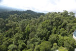 Selectively logged forest under FSC criteria -- sabah_aerial_2771