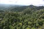 Selectively logged forest under FSC criteria -- sabah_aerial_2774