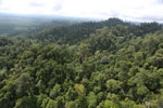 Selectively logged forest under FSC criteria -- sabah_aerial_2775