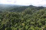 Selectively logged forest under FSC criteria -- sabah_aerial_2776