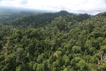 Selectively logged forest under FSC criteria -- sabah_aerial_2777