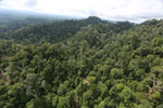 Selectively logged forest under FSC criteria -- sabah_aerial_2778