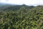 Selectively logged forest under FSC criteria -- sabah_aerial_2779