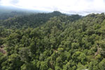 Selectively logged forest under FSC criteria -- sabah_aerial_2780