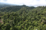 Selectively logged forest under FSC criteria -- sabah_aerial_2781