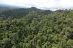Selectively logged forest under FSC criteria -- sabah_aerial_2782