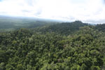 Selectively logged forest under FSC criteria -- sabah_aerial_2783