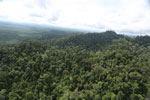Selectively logged forest under FSC criteria -- sabah_aerial_2784