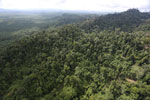 Heavily logged rainforest with an oil palm plantation in the distance -- sabah_aerial_2788