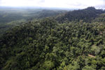 Heavily logged rainforest with an oil palm plantation in the distance