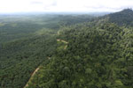 Logged forest and oil palm in Borneo -- sabah_aerial_2797