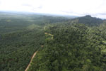 Logged forest and oil palm in Borneo -- sabah_aerial_2800