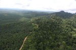 Logged forest and oil palm in Borneo -- sabah_aerial_2801