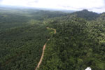Logged forest and oil palm in Borneo -- sabah_aerial_2803