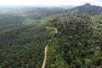 Logged forest and oil palm in Borneo -- sabah_aerial_2804